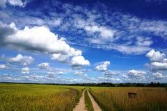 Strada rurale, giacimento di grano, cielo blu Fotografia Stock Libera da Diritti