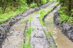 Strada rutted profonda attraverso la foresta Immagini Stock