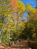 Strada a Santanoni nelle montagne di Adirondack Immagine Stock Libera da Diritti