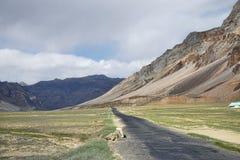 Strada scenica in valle dell'alta montagna Fotografie Stock Libere da Diritti