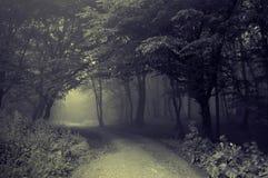 Strada scura in una foresta nebbiosa fotografie stock