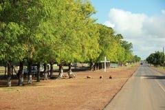 Strada Senegal immagini stock libere da diritti
