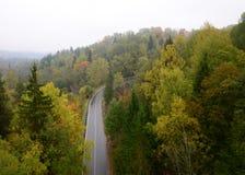 Strada senza fine nella foresta immagine stock