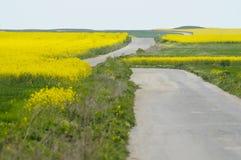 Strada sola fra i campi del seme di ravizzone giallo Immagine Stock Libera da Diritti