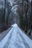 Strada sola nella foresta fotografia stock