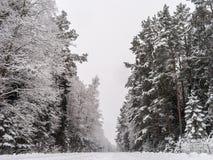 Strada sola nella foresta di inverno Fotografie Stock