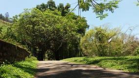 Strada sola Sri Lanka Fotografia Stock