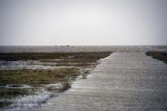 Strada soprelevata di alta marea a Mando Island in Danimarca Fotografie Stock