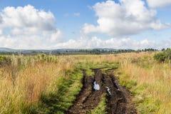 Strada sporca dell'azienda agricola Fotografia Stock