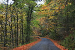 Strada sull'autunno, Portogallo del nord di Geres Immagine Stock