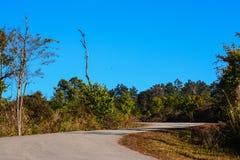 Strada sulla montagna di Phu Rua Fotografia Stock Libera da Diritti