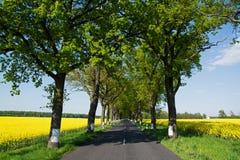 Strada a tempo di primavera, Germania dello stato Fotografia Stock Libera da Diritti