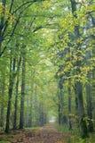 Strada a terra d'autunno nebbiosa Immagini Stock