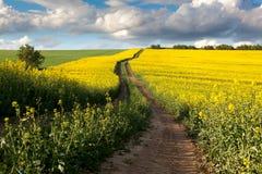 Strada a terra nel campo di fioritura, bella campagna Immagini Stock Libere da Diritti