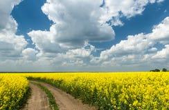 Strada a terra nel campo di giallo del seme di ravizzone Fotografie Stock Libere da Diritti