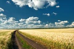 Strada a terra nel campo wheaten Immagini Stock