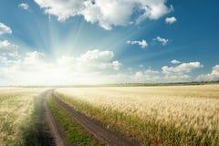 Strada a terra nel campo wheaten Fotografie Stock Libere da Diritti