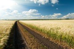 Strada a terra nel campo wheaten Fotografia Stock