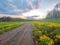 Strada a terra rurale immagine stock