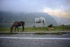 Strada tortuosa nelle montagne della Romania Fotografia Stock Libera da Diritti