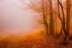Strada tramite il sole della foresta di autunno? ed i fogli di colore Immagine Stock
