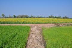 Strada trasversale al fleld del riso Fotografie Stock