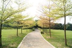 Strada Tree-lined Fotografie Stock Libere da Diritti