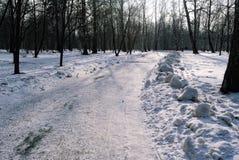 Strada in un parco di inverno Fotografia Stock