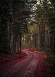Strada in una bella foresta Fotografia Stock Libera da Diritti
