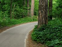 Strada in una foresta fotografie stock