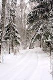 Strada in una foresta di inverno Fotografia Stock Libera da Diritti