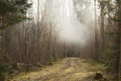 Strada in una foresta nebbiosa fotografia stock
