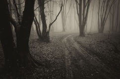 Strada in una foresta scura con nebbia su Halloween Fotografia Stock