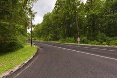 Strada in una foresta verde Fotografie Stock Libere da Diritti