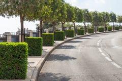Strada urbana con i cubi dei cespugli Immagini Stock
