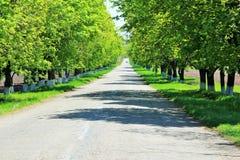 Strada verde Fotografie Stock