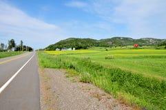Strada verde Fotografia Stock Libera da Diritti