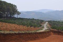 Strada vicino all'abetaia nella zona di montagna Fotografia Stock Libera da Diritti