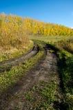 Strada vicino alla foresta d'autunno Fotografia Stock