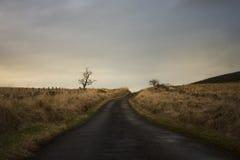 Strada vuota al crepuscolo Fotografia Stock Libera da Diritti