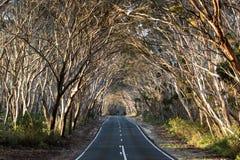 Strada vuota attraverso il legno dell'eucalyptus l'australia Giorno pieno di sole immagine stock libera da diritti