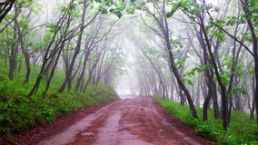 Strada vuota in foresta nebbiosa, nella mattina ed in fresco Immagine Stock Libera da Diritti
