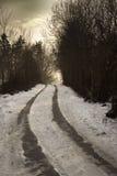 Strada vuota nella foresta di inverno nei colori di seppia Fotografia Stock Libera da Diritti