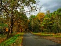 Strada vuota su Forest State Park del cuoco Immagini Stock