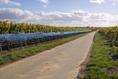 Strada in wineyards fotografia stock libera da diritti