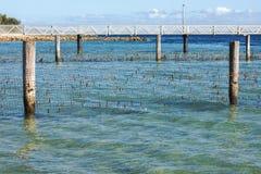 Δίκτυο καρχαριών στο νησί βόρειου Stradbroke, Queensland Στοκ φωτογραφία με δικαίωμα ελεύθερης χρήσης
