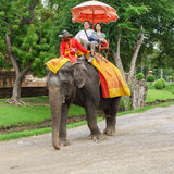 The straddle elephant sightseeing old city popular with tourists Stock Image