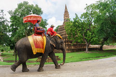 The straddle elephant sightseeing old city popular with tourists Royalty Free Stock Photo