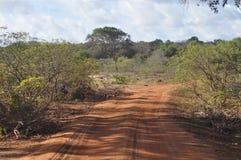 Strade all'interno della fauna selvatica Santuary di Yala Fotografie Stock Libere da Diritti