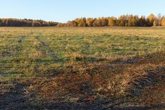 Strade campestri che passano attraverso il campo Alberi gialli nella distanza Autunno dorato immagine stock